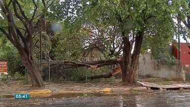 Ventos fortes e chuva causam estragos em Sinop - Ventos fortes e chuva causam estragos em Sinop
