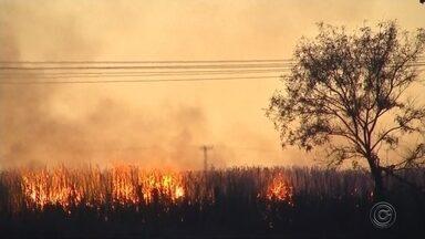 Bombeiros combatem incêndio em canavial em Rio Preto - Um canavial pegou fogo perto do distrito de Talhado, em São José do Rio Preto (SP), na madrugada desta segunda-feira (20). Segundo os Bombeiros, o fogo começou por volta das 3h e ainda não foi totalmente combatido.