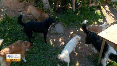 Polícia investiga suposto envenenamento de cães que apareceram mortos em Herval - Há registo de 24 cachorros e um gato que teriam sido mortos por envenenamento.