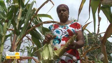 Especial da seca: pequenos agricultores perdem lavouras em Feira de Santana - Confira em mais um episódio da série sobre a seca na Bahia.