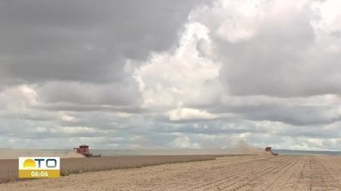 A chuva atípica no mês de agosto agrada à produtores rurais do Tocantins - A chuva atípica no mês de agosto agrada à produtores rurais do Tocantins