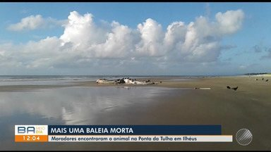 Baleia é encontrada morta em praia da Ponta da Tulha, em Ilhéus - Os moradores encontraram o animal morto durante a manhã desta quarta-feira (22).