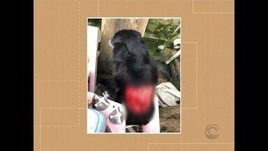 Polícia Civil investiga caso de maus tratos a uma cachorra em Santa Maria - O caso aconteceu na Vila Cauduro em Santa Maria.