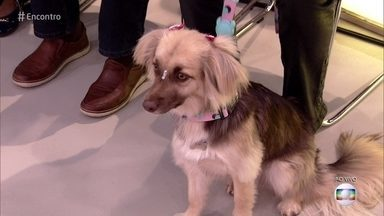 Bárbara França apresenta sua filhota canina Valentina - Atriz conta que adotou a cachorrinha de uma ONG
