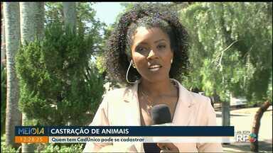 Castração de animais - Prefeitura está cadastrando famílias que participam de programas sociais.