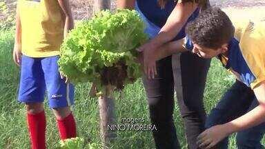 Escola de Barreiras realiza atividades de conscientização ao consumo de produtos orgânicos - A instituição oferece oficinas de plantação e cultivo de frutas e legumes.