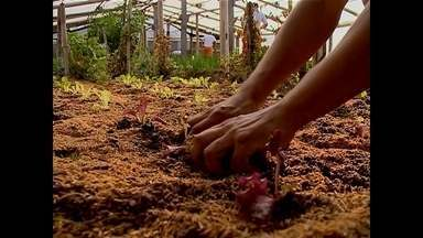 Presídio de Cacequi tem inciativa exemplo de como apenados podem trabalhar pela sociedade - A ideia é simples: uma horta dentro do presídio municipal de Cacequi. Mas é transformadora.