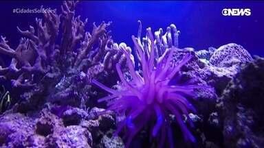 Veja pesquisas e avanços para proteger a biodiversidade marinha