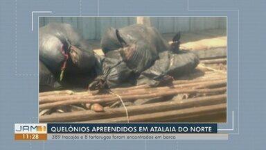 Mais de 300 quelônios são apreendidos em embarcação no interior do Amazonas - Homens que faziam o transporte da carga conseguiram fugir, segundo a PM-AM.