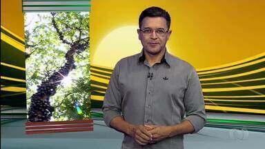 Confira os destaques do Jornal do Campo deste domingo (9) - Fazenda que mais produz jabuticaba fica em Goiás.