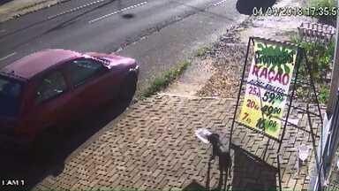 Cachorro é flagrado levando embora pote de ração de Pet Shop - Dona disse que pote foi encontrado em frente a uma casa onde tem vários cachorros.
