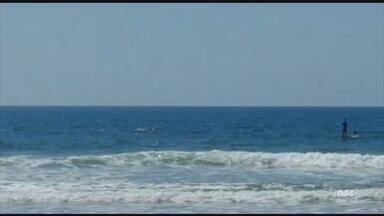 Cerca de 70 baleias são vistas no litoral de SC neste feriadão - Cerca de 70 baleias são vistas no litoral de SC neste feriadão