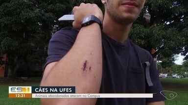 Cães abandonados atacam estudantes seis vezes em duas semanas na Ufes - As vítimas cobram uma solução para o problema. A Universidade disse que vai resgatar os animais e colocá-los para a adoção. Veja os depoimentos.