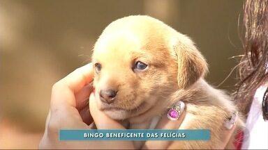Grupo de proteção aos animais realiza bingo - Ação acontece na cidade de Dourados.