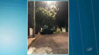 Queda de árvore atrapalha trânsito na Aldeota - Saiba mais em g1.com.br/ce