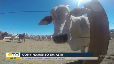 Hotel para boi: empresas se especializam na recria de animais - Hotel para boi: empresas se especializam na recria de animais