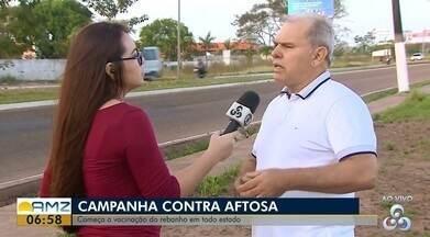 Começa a campanha de vacinação contra a febre aftosa em todo o Estado - Amapá foi o último da federação a ser reconhecido como área livre de aftosa