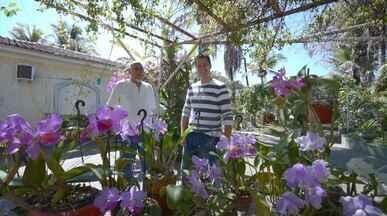 No 'Colecionando' deste sábado (22), Pedro Leonardo visita um orquidófilo - Em Ribeirão Bonito (SP), Pedro Leonardo conhece Seo Elias: um colecionador que possui mais de 20 mil orquídeas entre 5 mil espécies diferentes.