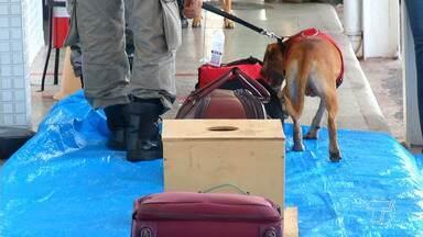 Projeto utiliza cães farejadores no combate ao tráfico de drogas na região - Projeto está em andamento e deve adquirir nove cães para este trabalho.