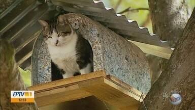 Atração em cidade de MG, 'gato medroso' agora tem parceira e filhotes em cima da árvore - Atração em cidade de MG, 'gato medroso' agora tem parceira e filhotes em cima da árvore