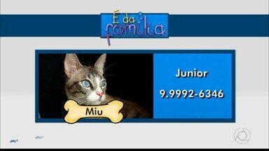 É da Família: ajude a encontrar os pets desaparecidos - Animais se perderam dos donos.