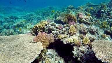 Floresta tropical submarina pode ser vista nas águas transparentes do Mar Vermelho - Imensas colônias de corais, cardumes enormes e muita vida marinha: este mar fascinante é um verdadeiro espetáculo para os olhos.
