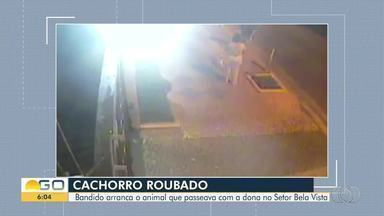 Mulher tem cachorro levado por assaltante armado em Goiânia - Imagens mostram momento em que ela passeia com o animal, um pug, e é abordada por um homem; crime ocorreu no Setor Bela Vista, região sul da capital.