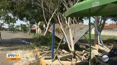 Ventos fortes e chuva causam estragos em Santa Lúcia, SP - Pelo menos 5 árvores caíram e muitos galhos ficaram espalhados.