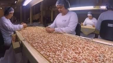 Produtores de Tupã festejam sucesso na exportação de amendoim - As indústrias de Tupã estão comemorando o sucesso do amendoim no exterior. A produção não chega nem a ficar em estoque e a expectativa é que o setor exporte 30% a mais do que no ano passado.