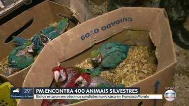 PM encontra 400 animais silvestres em condições precárias em casa em Francisco Morato - Nem os animais escapam da violência. A Polícia Militar descobriu uma casa com cerca de 400 bichos silvestres em condições precárias, em Francisco Morato. Quatro pessoas foram detidas.