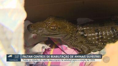Municípios sofrem com falta de centros de reabilitação de animais silvestres - A Secretaria do Meio Ambiente de São Paulo vai definir como ajudar as cidades nessa questão.