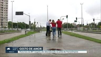 Motorista do BRT resgata cachorro que estava em uma das pistas do corredor Transolímpica - Silvio Gomes acabou virando o dono do cãozinho, que foi batizado de Olímpicus.