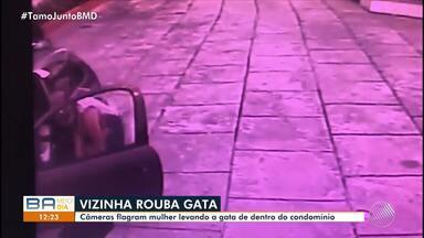 Ministério Público denuncia mulher pelo desaparecimento da gata da vizinha - A moradora teria furtado o animal; confira os detalhes.