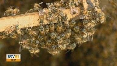 Ataques de abelhas aumentam na primavera e no verão - Especialistas explicam os motivos.