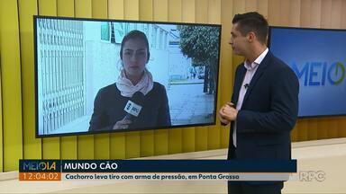 Cachorro leva tiro de arma de pressão em Ponta Grossa - Atirador foi detido pela Guarda Municipal.