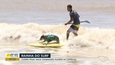 Cadela Maya vence campeonato mundial de surf na Califórnia - Cadela de Marataízes já está se preparando para novas competições.