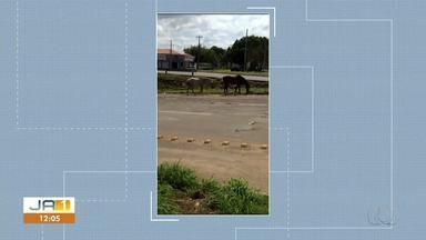 Morador registra dupla de cavalos andando em pista movimentada na entrada de Taquaralto - Morador registra dupla de cavalos andando em pista movimentada na entrada de Taquaralto