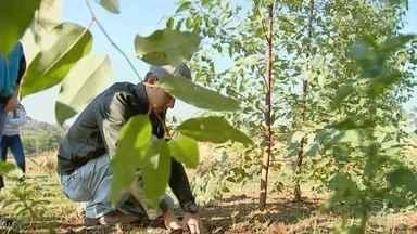 Estudantes criam mudas de eucalipto a partir de clone em Monte Aprazível - undefined