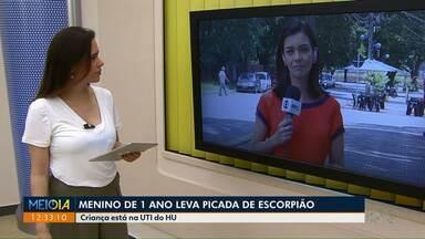 Menino picado por escorpião em Maringá está na UTI - Garoto de 1 ano e meio apresentou melhora, mas estado ainda é grave