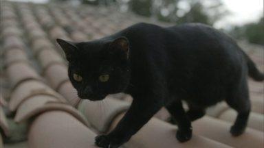 """Gato preto é peça-chave de segredos de """"O Sétimo Guardião"""", nova novela das nove da Globo - Fantástico mostra como são os bastidores das gravações e como a equipe faz para que os quatro felinos que 'se revezam no papel' se comportem no estúdio."""