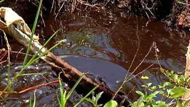 Óleo derramado em área de proteção de Mogi vai parar em córrego - Brejinho recebeu dezenas de litros de óleo diesel.