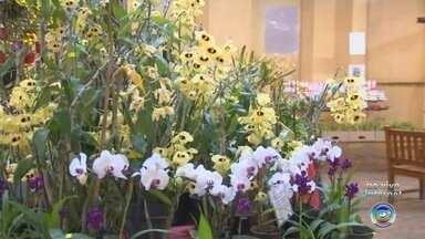 """Feira reúne exposição de orquídeas e presépios durante o feriado em Itu - A 13ª edição da feira """"Orquídeas & Cultura"""" será atração na antiga Fábrica de Tecidos São Luiz, no Centro Histórico de Itu (SP), de quinta (15) a terça-feira (20). A entrada é gratuita."""