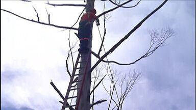 Defesa Civil de Itaquaquecetuba analisa e retira árvores condenadas - Objetivo é evitar acidentes durante temporais.