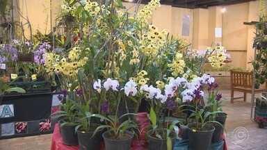 Exposição de orquídeas é atração gratuita em Itu - Em Itu (SP), uma exposição de orquídeas une lazer e solidariedade. É a 13ª edição do evento.