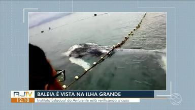 Baleia é encontrada na Praia Araçatibinha, na Ilha Grande - Instituto Estadual do Ambiente está acompanhando o caso.