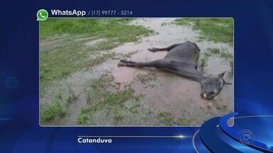 Cavalo abandonado é sacrificado em Catanduva - Um cavalo que estava abandonado em Catanduva (SP) precisou ser sacrificado. O animal foi visto por vários moradores agonizando no recinto de exposições da cidade. Em nota, a prefeitura informou que o bicho recebeu atendimento veterinário, mas não apresentou melhora.