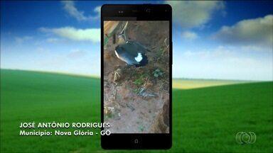 Confira as fotos e vídeos enviados para o quadro Imagens do Campo - Imagens podem ser encaminhadas por email, QVT e Whatsapp.