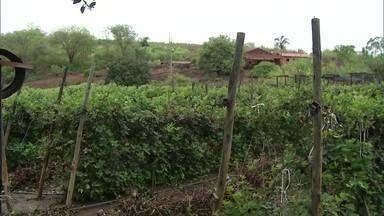 Com assistência técnica e pesquisa, produtores têm colhido bons frutos no Norte de Minas - As frutas vermelhas são comuns na região sul, mas tem tido bons resultados na região norte também.