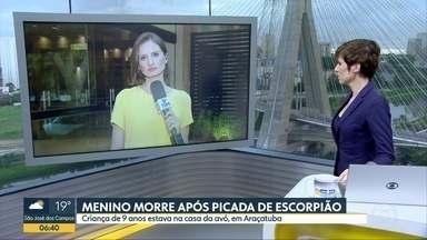 Menino morre após picada de escorpião - Criança de nove anos estava na casa da avó, em Araçatuba
