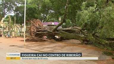 Equipe retira árvore com 50 anos que desabou durante temporal em Ribeirão Preto - Tronco interdita parte do calçadão na Praça XV de Novembro, mas ninguém ficou ferido.